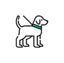 Esterilización de Perros